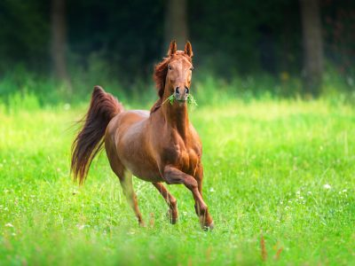 vitamine E paarden