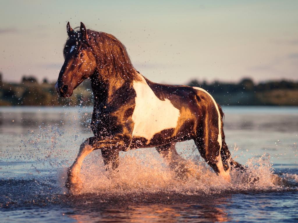 Beringzeewater bij paarden