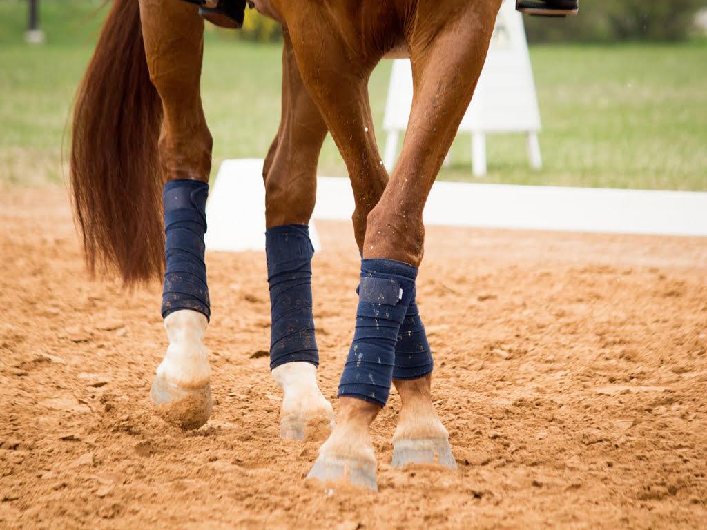 Kristalvorming in gewrichten paard