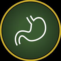 Orgaan aandoeningen bij paarden