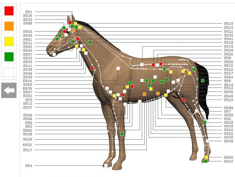 Zenuwblokkades bij paarden