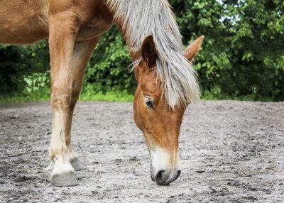 silicium zand eten paard