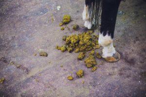 Mest paard spijsvertering